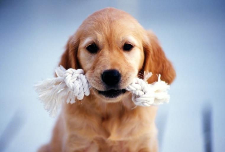 狗狗总是咬东西怎么办
